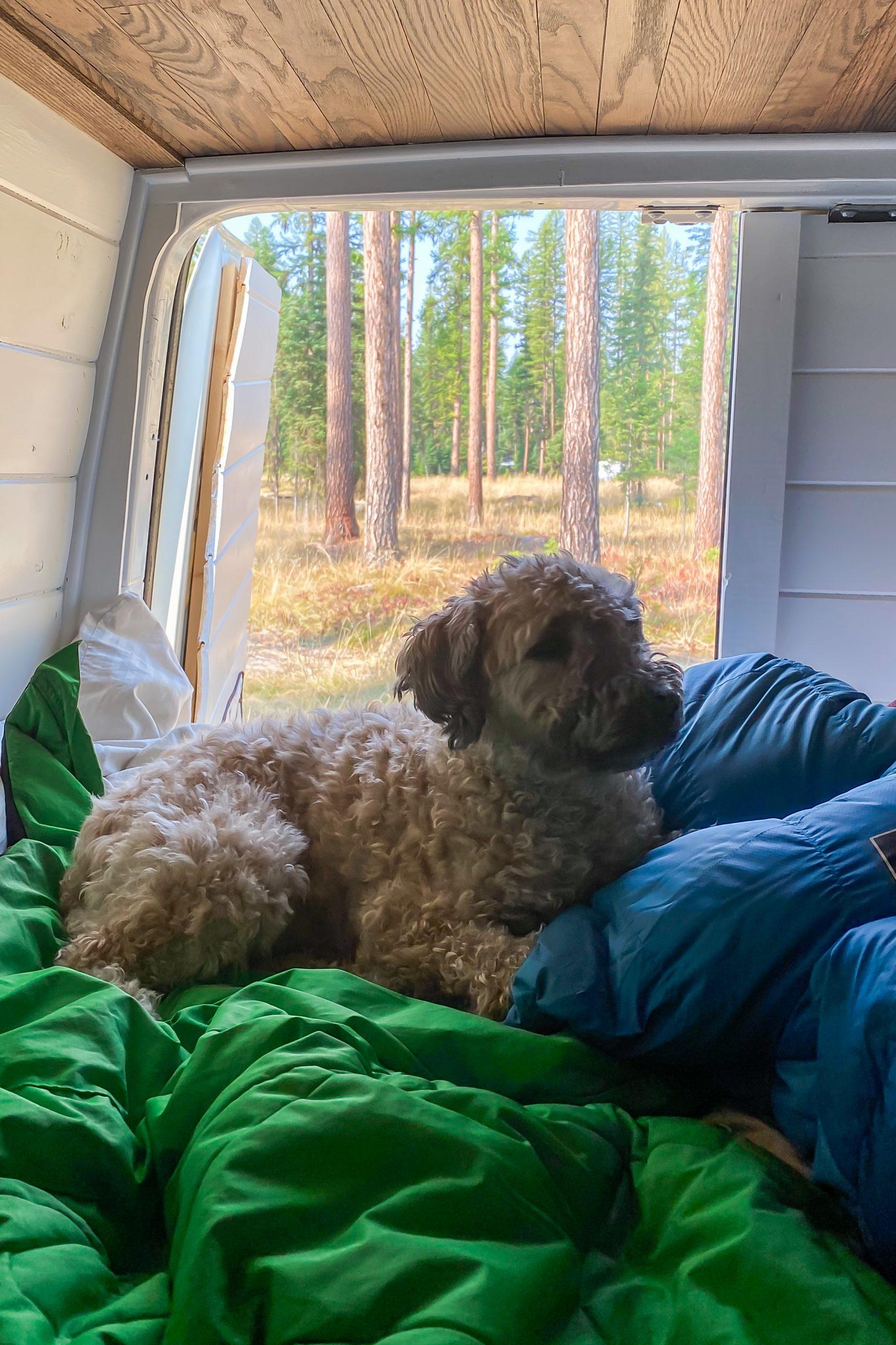 Kaia enjoying the van life